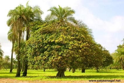 climat du Sénégal